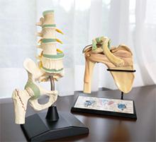 肩関節や股関節の部分模型を使い、治療などの詳しい説明を行う
