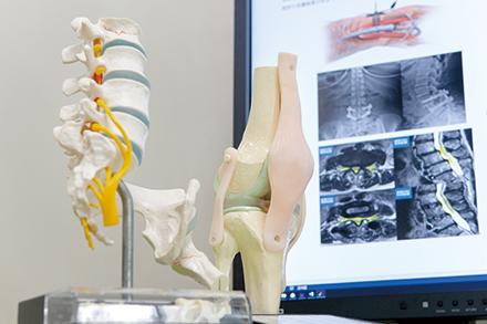 診察の際には、模型やエックス線画像を用いて、患者に寄り添った説明を行う